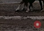 Image of Farmer plowing field New York United States USA, 1970, second 52 stock footage video 65675040534