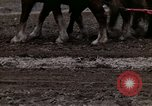 Image of Farmer plowing field New York United States USA, 1970, second 53 stock footage video 65675040534