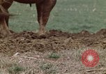Image of Horse drawn plow New York United States USA, 1970, second 24 stock footage video 65675040541