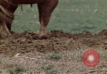 Image of Horse drawn plow New York United States USA, 1970, second 25 stock footage video 65675040541