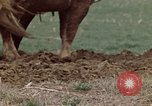 Image of Horse drawn plow New York United States USA, 1970, second 26 stock footage video 65675040541