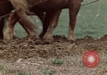 Image of Horse drawn plow New York United States USA, 1970, second 27 stock footage video 65675040541