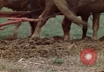 Image of Horse drawn plow New York United States USA, 1970, second 28 stock footage video 65675040541