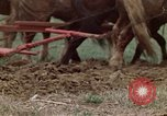 Image of Horse drawn plow New York United States USA, 1970, second 29 stock footage video 65675040541