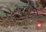 Image of Horse drawn plow New York United States USA, 1970, second 32 stock footage video 65675040541