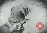 Image of food relief for Germany after World War 1 Germany, 1920, second 14 stock footage video 65675040647