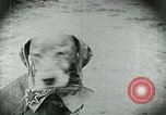 Image of food relief for Germany after World War 1 Germany, 1920, second 18 stock footage video 65675040647