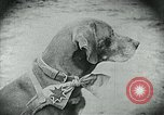 Image of food relief for Germany after World War 1 Germany, 1920, second 20 stock footage video 65675040647