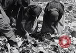 Image of German people Munich Germany, 1946, second 41 stock footage video 65675040673