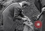 Image of German people gather fuel end World War 2 Munich Germany, 1945, second 41 stock footage video 65675040680