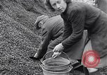 Image of German people gather fuel end World War 2 Munich Germany, 1945, second 54 stock footage video 65675040680