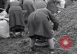 Image of German people gather fuel end World War 2 Munich Germany, 1945, second 59 stock footage video 65675040680