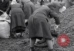 Image of German people gather fuel end World War 2 Munich Germany, 1945, second 60 stock footage video 65675040680