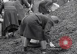 Image of German people gather fuel end World War 2 Munich Germany, 1945, second 62 stock footage video 65675040680