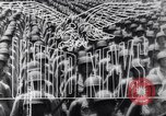 Image of Invasion of Sicily Italy, 1943, second 13 stock footage video 65675040765