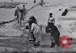 Image of Oasis Iran, 1944, second 37 stock footage video 65675041200