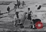 Image of Oasis Iran, 1944, second 44 stock footage video 65675041200