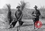 Image of 24th Infantry Regiment during Mexican Expedition Mexico, 1916, second 32 stock footage video 65675041208