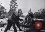 Image of tree cutting contest Luther Washington USA, 1935, second 22 stock footage video 65675041274