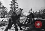 Image of tree cutting contest Luther Washington USA, 1935, second 23 stock footage video 65675041274