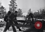 Image of tree cutting contest Luther Washington USA, 1935, second 24 stock footage video 65675041274