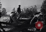 Image of tree cutting contest Luther Washington USA, 1935, second 29 stock footage video 65675041274