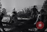 Image of tree cutting contest Luther Washington USA, 1935, second 32 stock footage video 65675041274