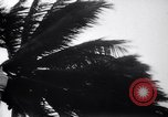 Image of Hurricane Jamaica, 1951, second 22 stock footage video 65675041347