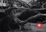 Image of Hurricane Jamaica, 1951, second 52 stock footage video 65675041347