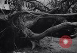 Image of Hurricane Jamaica, 1951, second 54 stock footage video 65675041347