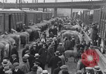 Image of Circus New York City USA, 1931, second 13 stock footage video 65675041396
