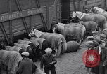 Image of Circus New York City USA, 1931, second 18 stock footage video 65675041396