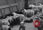 Image of Circus New York City USA, 1931, second 19 stock footage video 65675041396