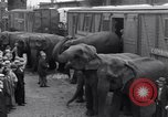 Image of Circus New York City USA, 1931, second 29 stock footage video 65675041396