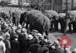 Image of Circus New York City USA, 1931, second 54 stock footage video 65675041396