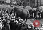 Image of Circus New York City USA, 1931, second 57 stock footage video 65675041396