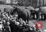 Image of Circus New York City USA, 1931, second 58 stock footage video 65675041396