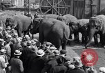 Image of Circus New York City USA, 1931, second 59 stock footage video 65675041396
