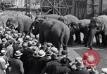 Image of Circus New York City USA, 1931, second 60 stock footage video 65675041396