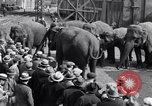 Image of Circus New York City USA, 1931, second 61 stock footage video 65675041396