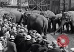 Image of Circus New York City USA, 1931, second 62 stock footage video 65675041396