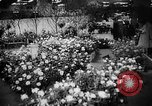 Image of International Flower Show New York City USA, 1961, second 19 stock footage video 65675041459