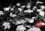 Image of International Flower Show New York City USA, 1961, second 24 stock footage video 65675041459