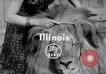 Image of Pet lion in captivity Illinois United States USA, 1954, second 4 stock footage video 65675041493