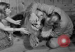 Image of Pet lion in captivity Illinois United States USA, 1954, second 12 stock footage video 65675041493