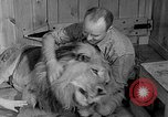 Image of Pet lion in captivity Illinois United States USA, 1954, second 15 stock footage video 65675041493