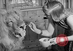 Image of Pet lion in captivity Illinois United States USA, 1954, second 23 stock footage video 65675041493