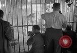 Image of Pet lion in captivity Illinois United States USA, 1954, second 32 stock footage video 65675041493