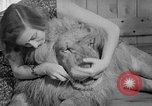 Image of Pet lion in captivity Illinois United States USA, 1954, second 33 stock footage video 65675041493