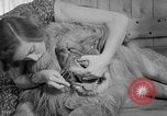 Image of Pet lion in captivity Illinois United States USA, 1954, second 34 stock footage video 65675041493